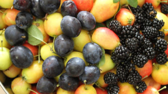 image of fruit